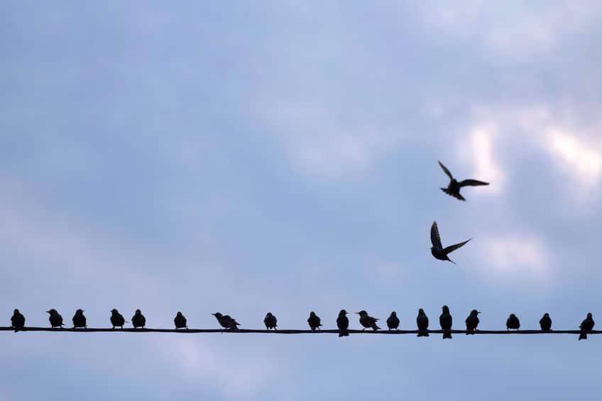 鳥は1本の電線にしか触れていない!についてのトリビア