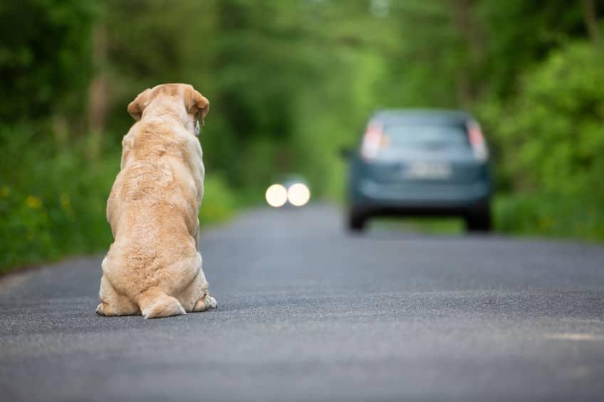 苦肉の策で捨て犬となっていたシロについてのトリビア