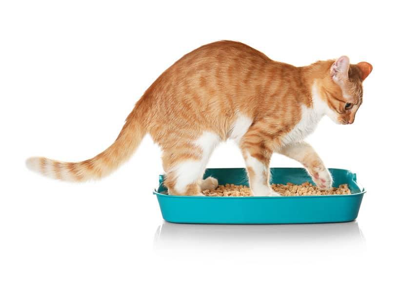 「ねこばば」は猫がフンの上に砂をかけて隠すことに由来しているというトリビア