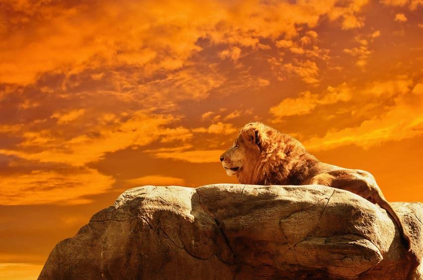 ライオンに関する雑学まとめ