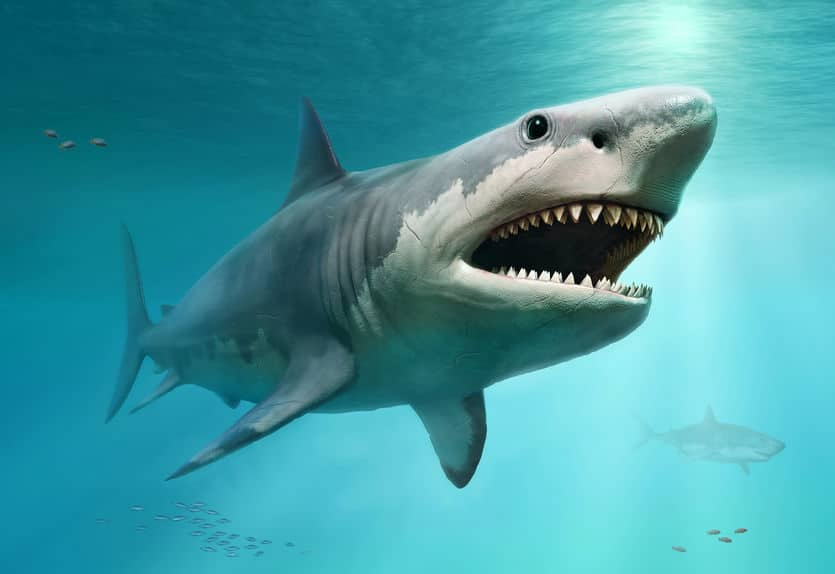 サメに関する雑学まとめ