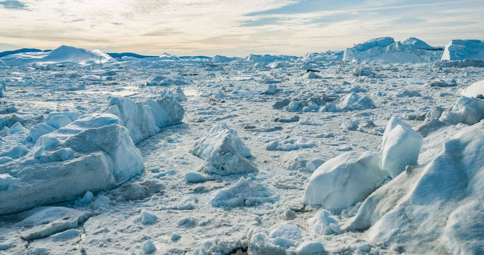 オオウミガラスは北半球に生息していたがペンギンは北極にはいないというトリビア