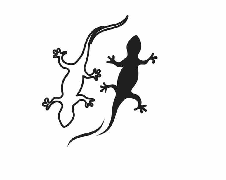 イモリとヤモリの見分けかたに関する雑学