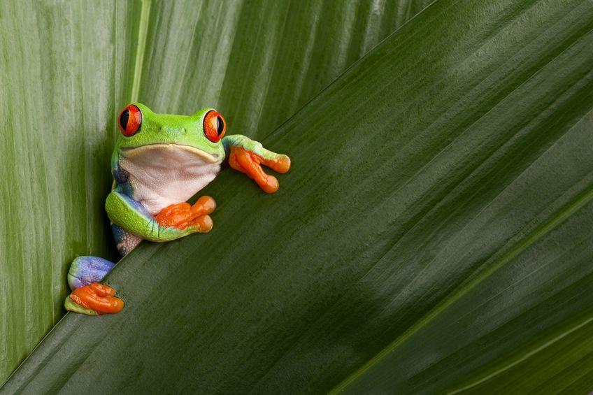 「蛇に睨まれた蛙」に関する雑学