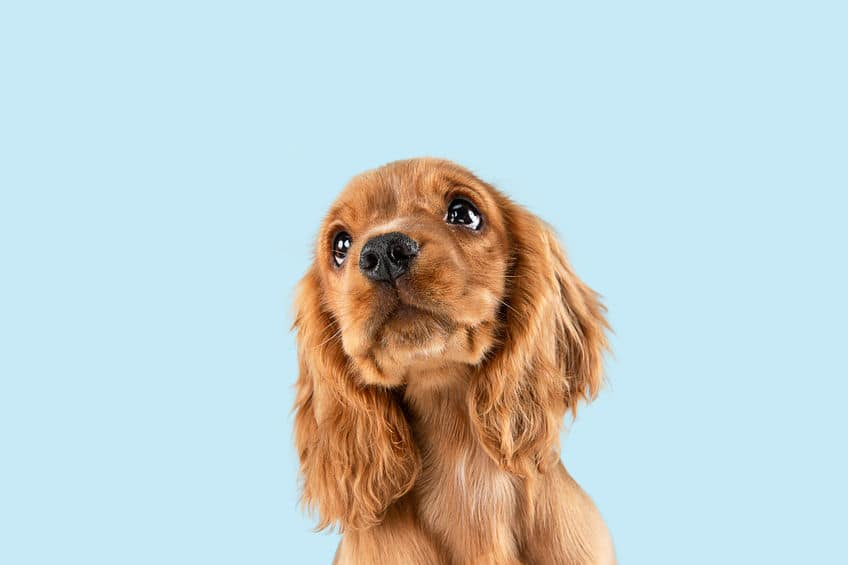 犬が見ている「色」についての雑学まとめ