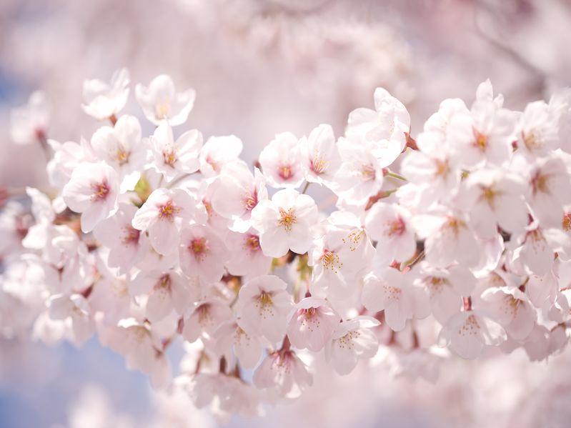 墓石の代わりに木や花を植えるお墓もあるという雑学