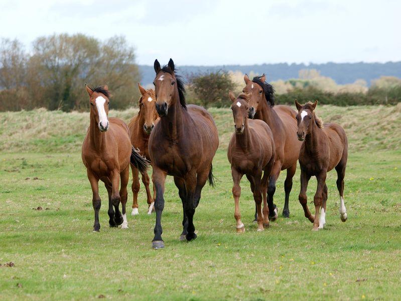 馬に関する雑学まとめ