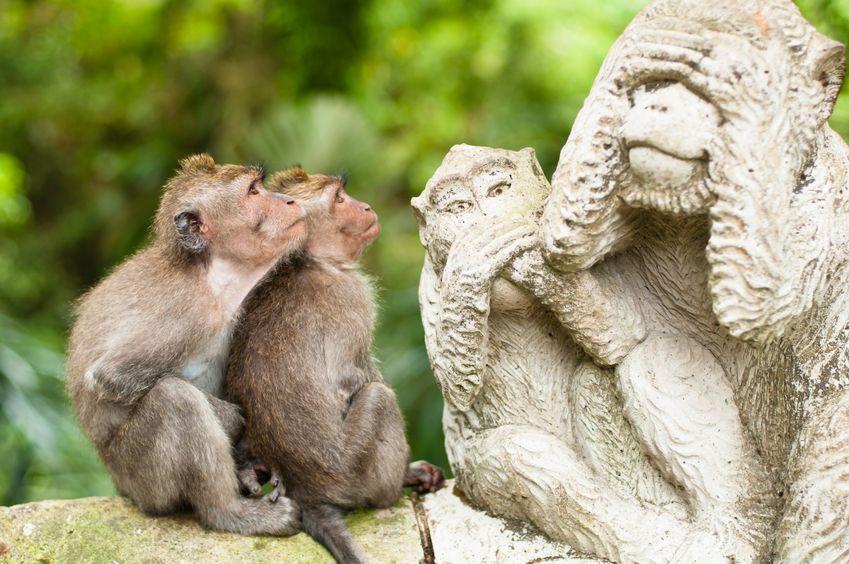 豊臣秀吉の「サル」というあだ名に関する雑学