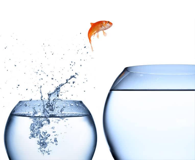 金魚を飼う際の環境に関する雑学