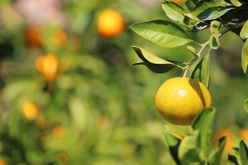 山口県のガードレールは一部が黄色という雑学まとめ