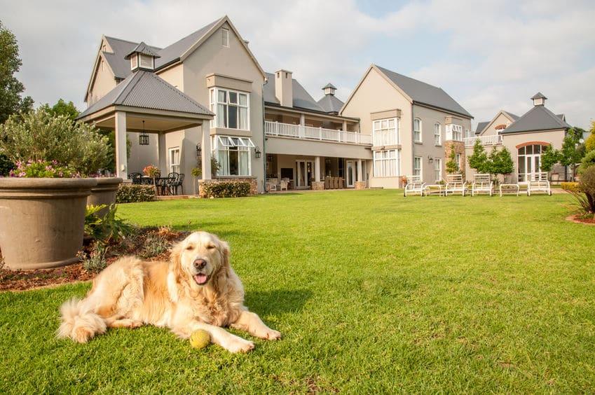 生類憐れみの令では、犬に戸籍と豪邸が与えられたという雑学