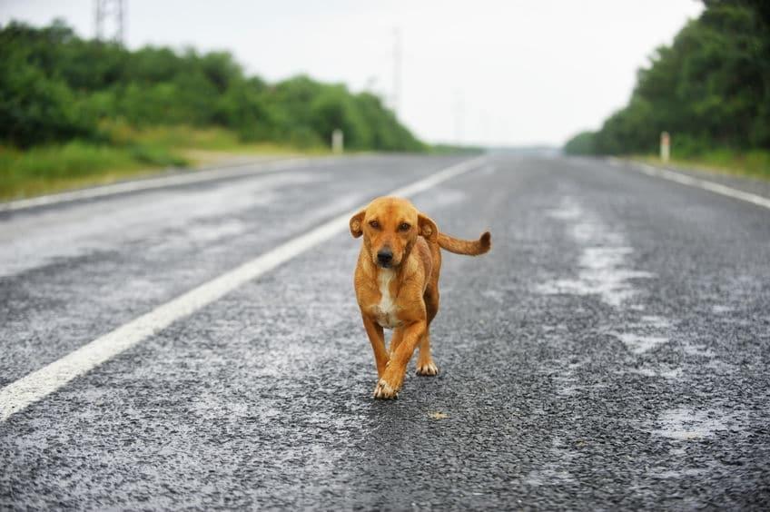牛だけでなく犬も!インドでは「野良犬」にもご注意!についてのトリビア