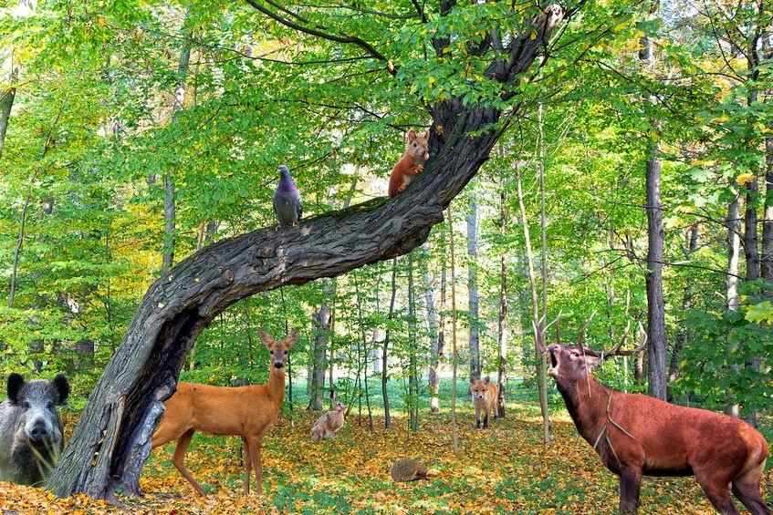 落ちたツノは森の動物たちの栄養源にもなるという雑学