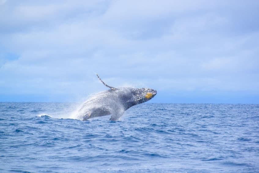 クジラの映画になる可能性もあったというトリビア