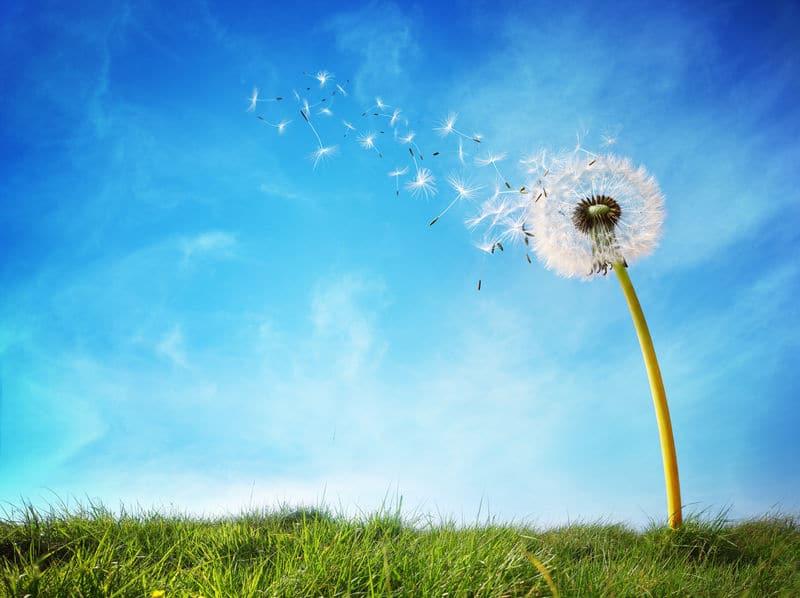 「円盤投げ」では、追い風と向かい風はどちらが有利?というトリビア