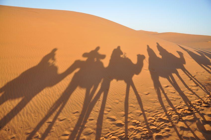 ラクダの生態に関する雑学