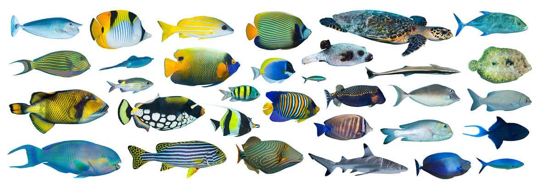 魚に関する雑学まとめ