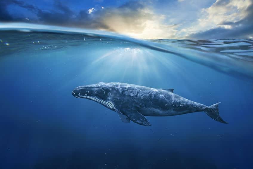 クジラについての雑学まとめ