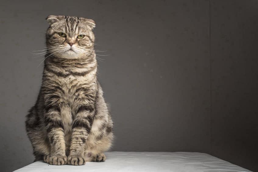 猫がフンを隠す理由についてのトリビア