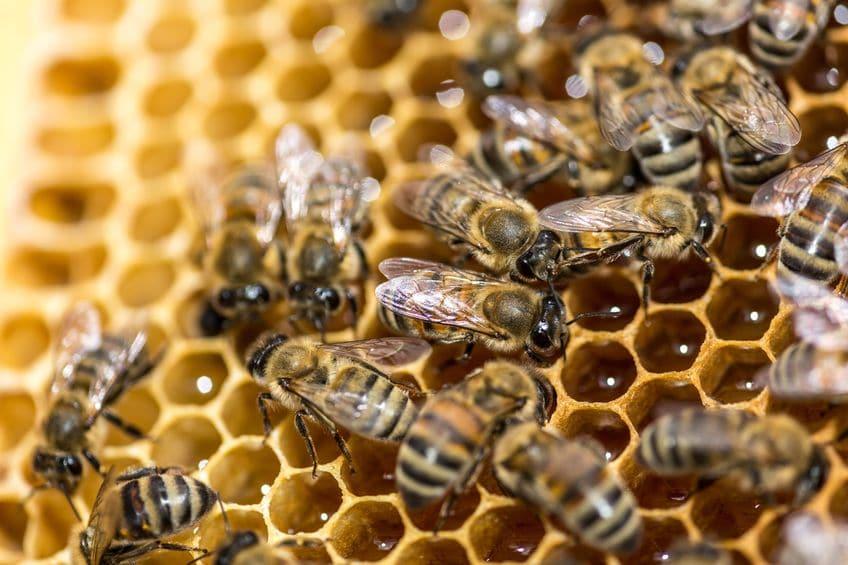 軍隊のような統率力!ミツバチは女王蜂によって徹底的に管理されているというトリビアまとめ