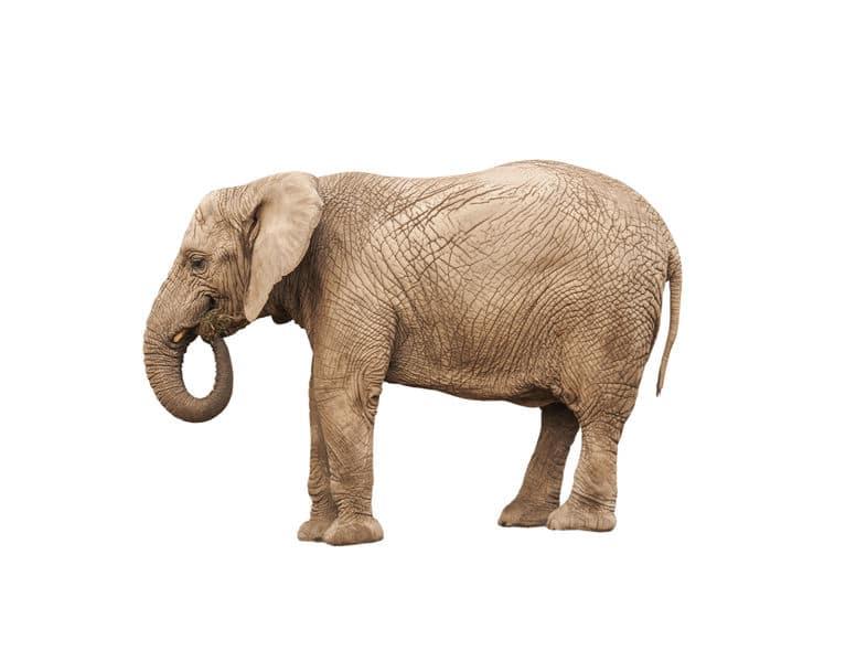 アルプススタンドにゾウを連れ込んだ高校があるという雑学