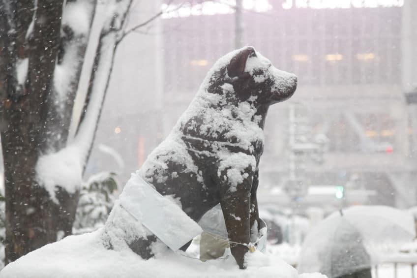 初代「忠犬ハチ公」の像は戦争への出陣式が行われたという雑学