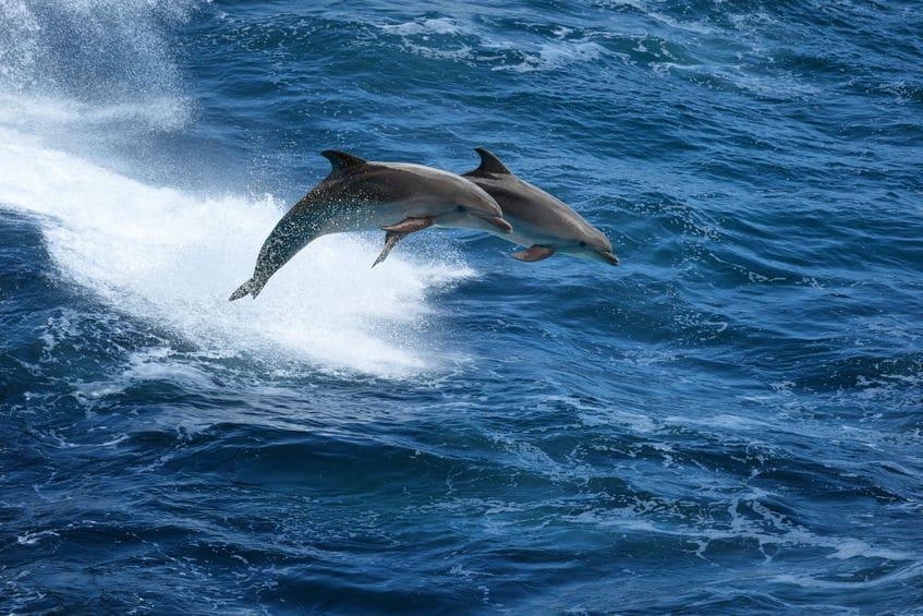 イルカのジャンプに関する雑学まとめ