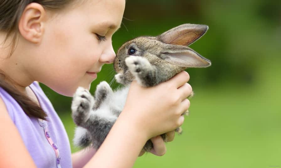 ウサギには肉球がないという雑学まとめ