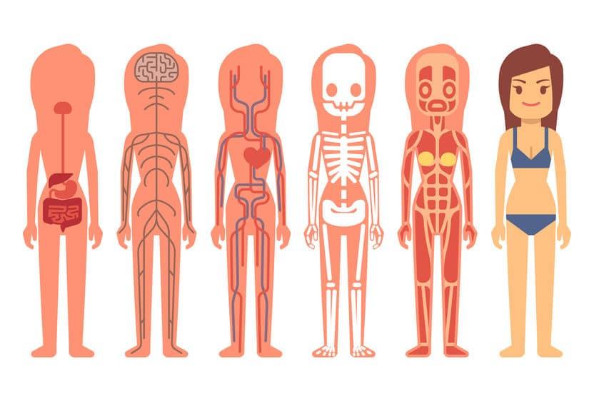 体の仕組みの雑学まとめ