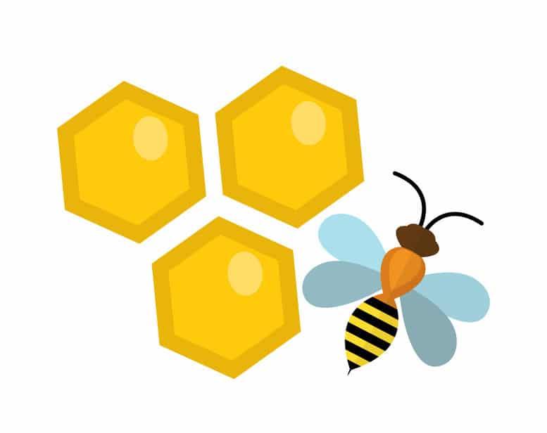 「イチロー」の名前が新種のハチの由来となったという雑学