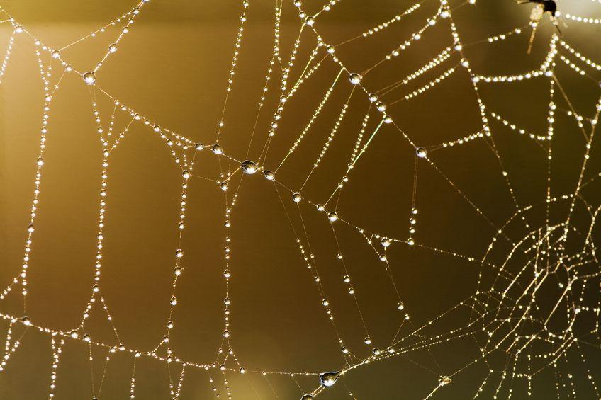 オニグモは毎晩巣を張り毎朝たたむというトリビア
