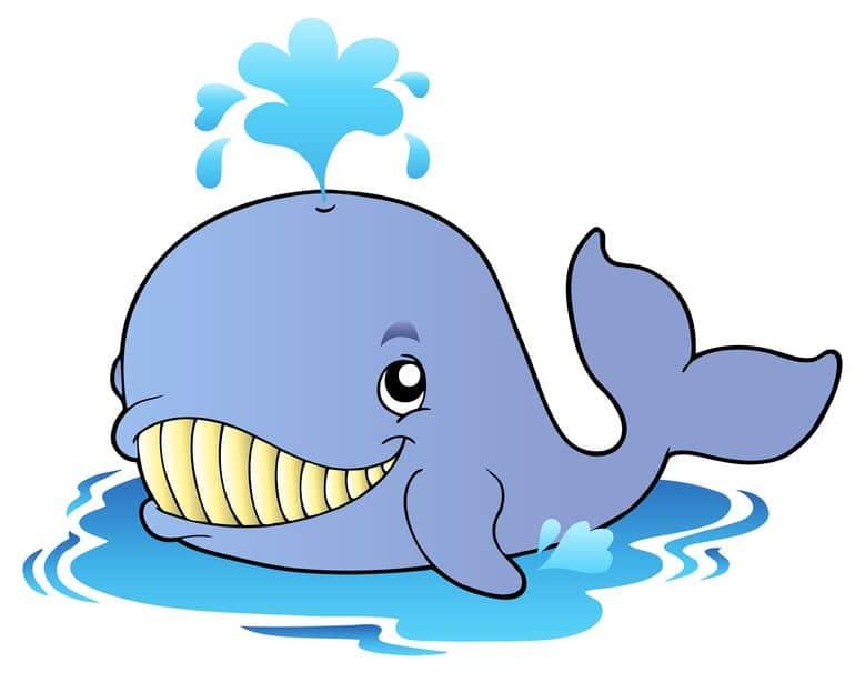 クジラの潮の吹き方はクジラの種類によって違うという雑学