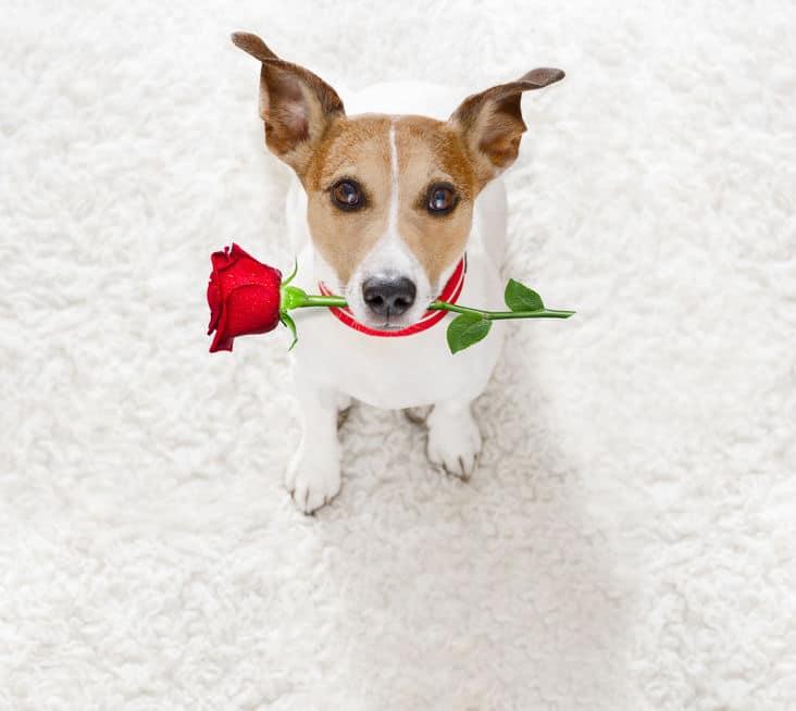 雌犬と結婚した男性についてのトリビア