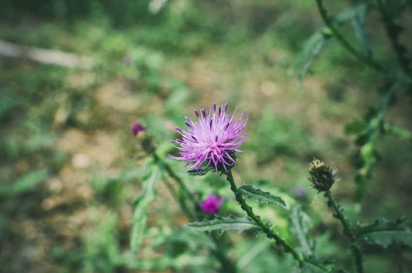 ネガティブすぎ…!ゴボウの花言葉がひどすぎる。というトリビアまとめ