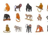 ゴリラ/チンパンジー/サルに関する雑学まとめ