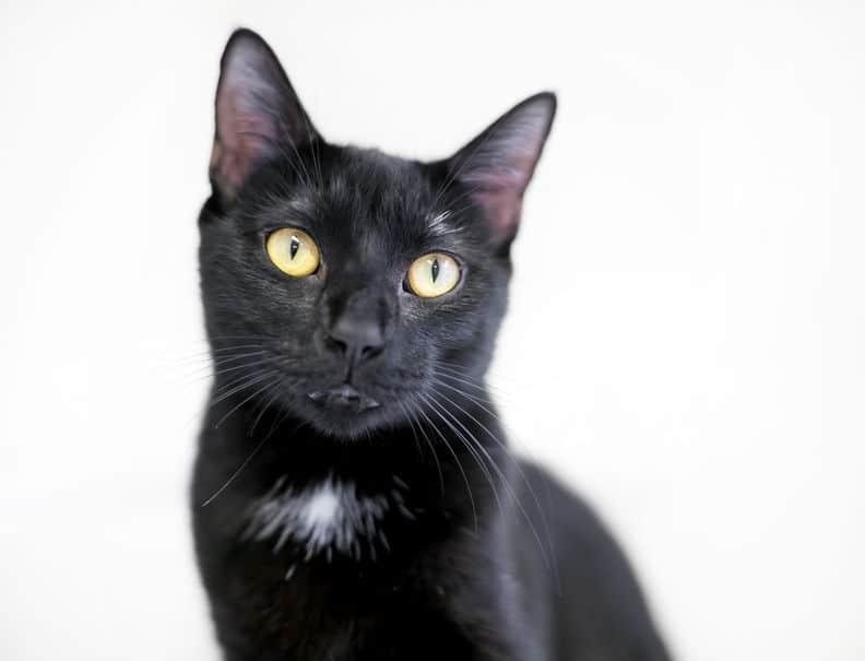 ヤマト運輸が黒猫をモチーフにした理由についてのトリビア